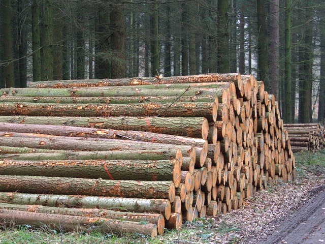 Timber Buyers in the South Eastern United States